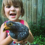 The Monkey and Amy, a barred rock bantam pullet